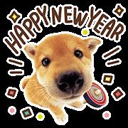 THE DOG的新年祝福