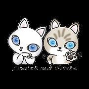 "[""Blue eyes cat ""Maiko""& ""Ataru""""]"