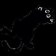 The cat, Miiko