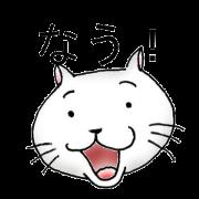 Now cat