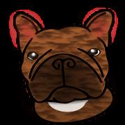 真正的法國鬥牛犬,所有的顏色!