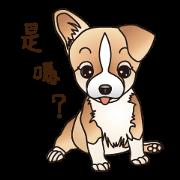 各種狗狗(實用對話篇)