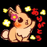 Flower rabbit heart's