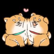 Japanese dog Mofumarou