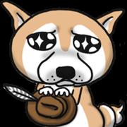 Shiba dog PanPan's normal life  3
