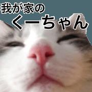 the sticker of the cute cat