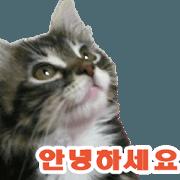 Picture of the kitten Korean version