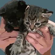 Kitten 01 Korean version