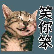 1350644 - 辛卡米克貓奴之實喵篇 line原創貼圖