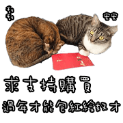 貓奴必備 貓咪翻譯機