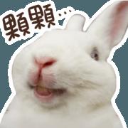 不死兔的兔兔-真兔版