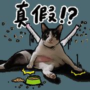 蛋頭的貓室友照片貼圖