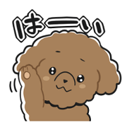 Toy poodle-chan