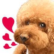 Poodle-This Is Acting (EN-1)