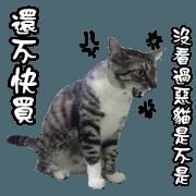 貓奴必備 貓咪翻譯機 第二彈