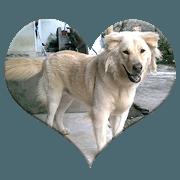 Romi Dog