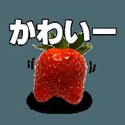 STRAWBERRY GO (JAPAN)
