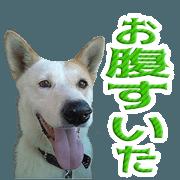 Osan's Sticker