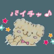 Capricious Toy Poodle Hapio