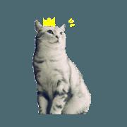 貓老闆的貓老闆們