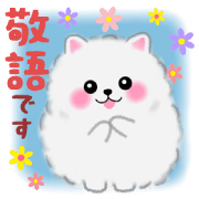cute white Pomeranian 2
