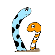 spotted garden eels (daily)