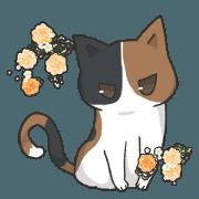 我們的可愛貓咪02