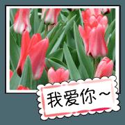 Flower photo greeting card ...