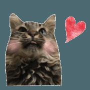 cat of cure Facial expressions