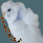 cute cute parakeet