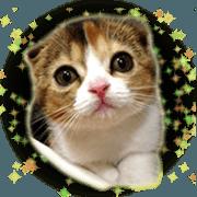 BARON Staff Sticker