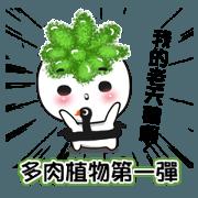 多肉植物第一彈 succulent plant NO.1