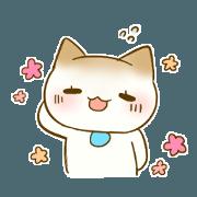 tomboy cat shiratama