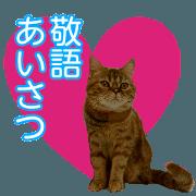all cat photo sticker keigo