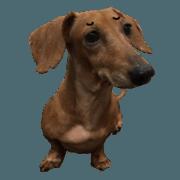 七奶皇后彎-真狗篇2