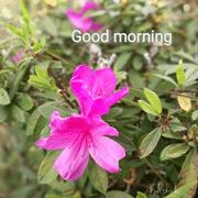 Hello Flowers 1