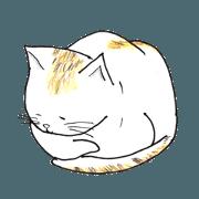 Everyday Tortoiseshell cat