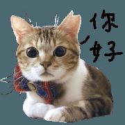 肚臍是隻貓生活篇