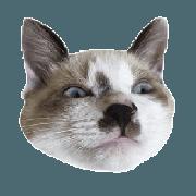 A cat AL