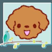 Crayon's toy poodle