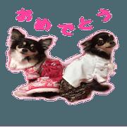 ChoKota Sticker