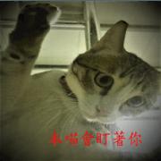 白目貓與蠢蠢狗