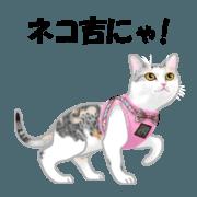 Pastel Cat Diary Nekokichi sticker Vol.3