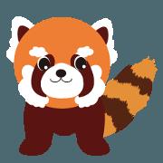 red panda ARAI_san
