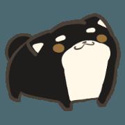 firmly thing Shiba Inu 2