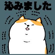 Polite fat cat