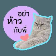 [Fuji] Big Cute Cruel Cat