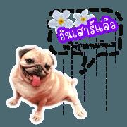 PetStory By Bell V.2