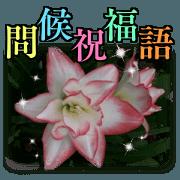 花之物語(問候祝福語)