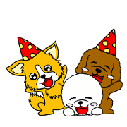 Bichon Frize, Toy Poodle and Chihuahuas